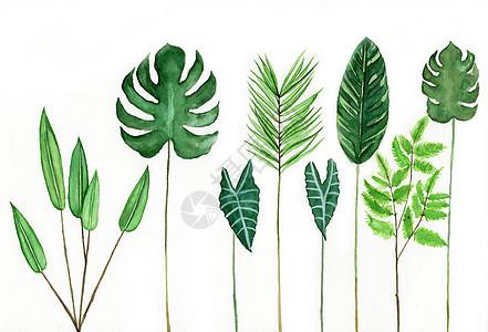水彩手绘植物叶子图片
