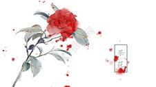 中国风手绘茶花插画图片