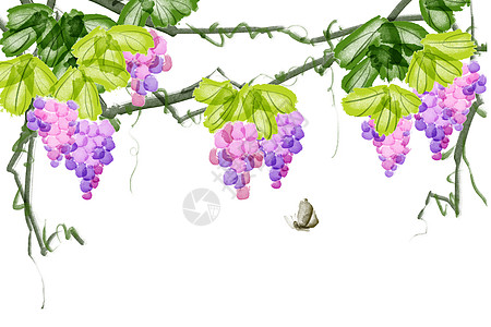 葡萄背景图片