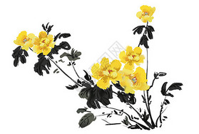 黄牡丹图片