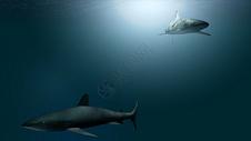 海底鲨鱼图片