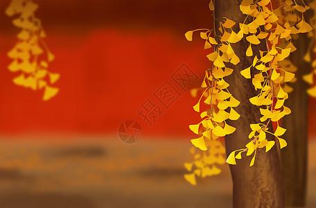 立秋银杏图片