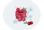 水果樱桃图片