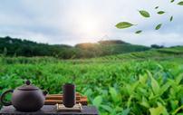 茶与饮食健康400303634图片