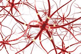 神经元细胞图片