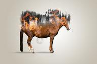 生态恶化图片