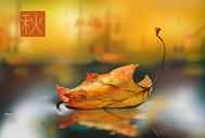 立秋落在水面的枫叶图片