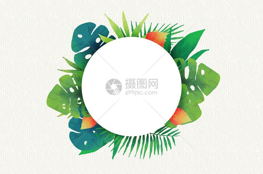 热带植物素材图片
