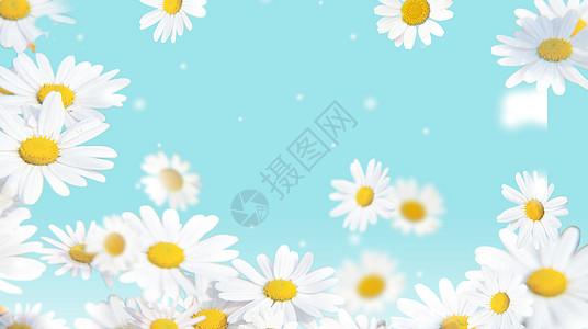 浪漫鲜花背景图片