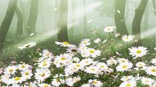 森林场景图片