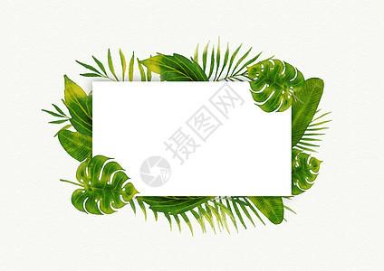热带植物叶子图片