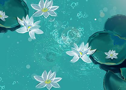 夏天 池塘图片