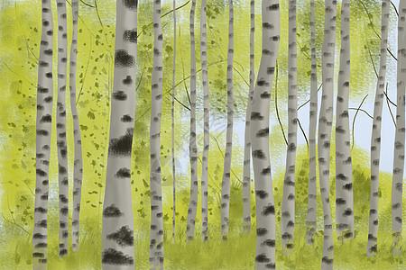 茂密的树林图片