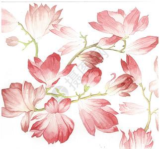 水彩玉兰花底纹图片