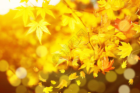 唯美秋叶背景图片