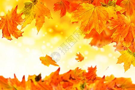 秋季背景图片