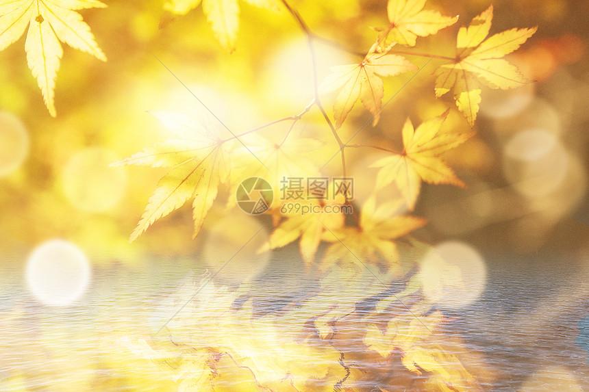 唯美秋季背景图片
