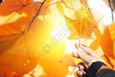 手拿枫叶图片