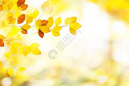 秋天唯美图片