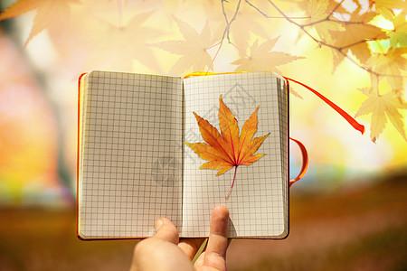 秋季创意图片图片