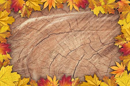 秋季实木背景图片