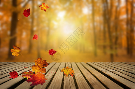 秋天的落叶图片