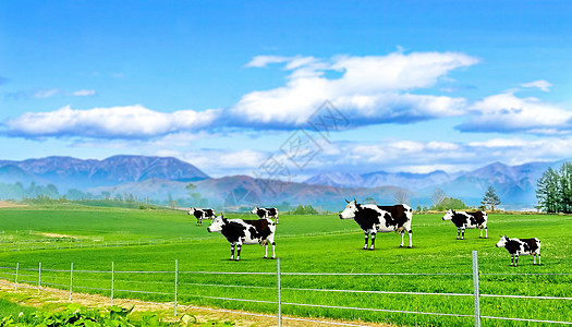唱片牧场图片