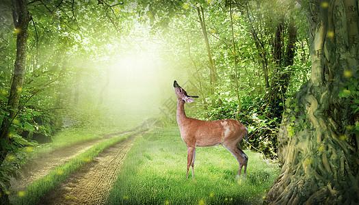 唯美自然环境图片