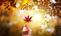 秋季叶子背景图片