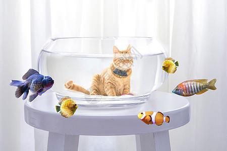 搞怪猫咪图片