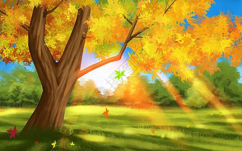 秋分阳光树林插画图片