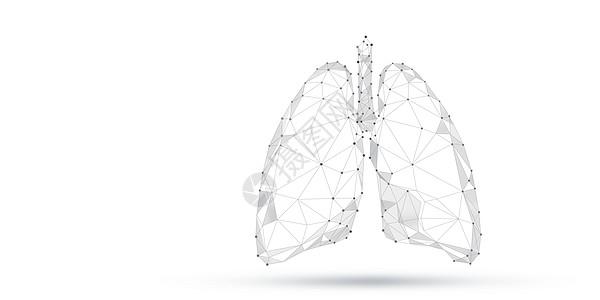 人体器官肺部图片