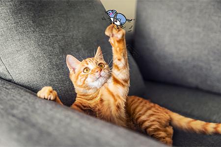 猫星人逗老鼠创意摄影插画图片