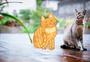 卡通手绘橘猫创意摄影插画图片