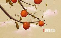 霜降柿子手绘插画图片