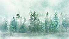 梦幻森林场景图片