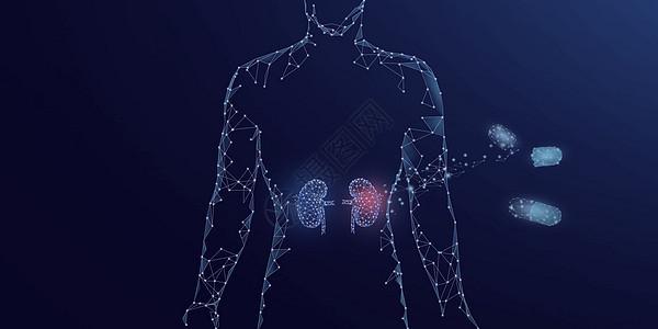 人体器官肾脏药物治疗图片