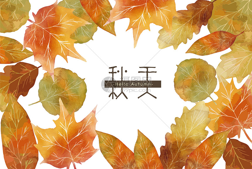枫树叶图片