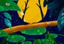 寒露树林图片