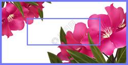 清新花卉插画杜鹃花图片