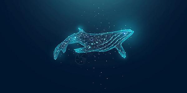 海洋鲸鱼图片
