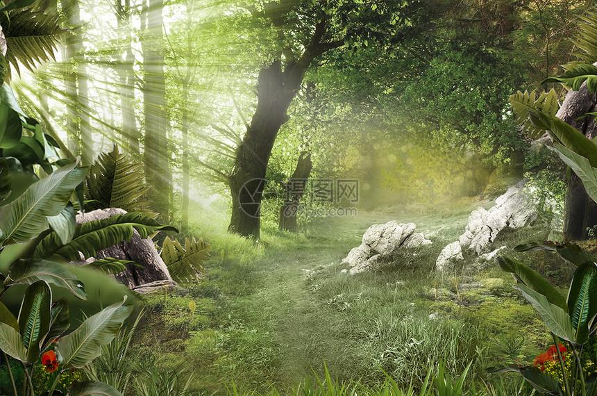 梦幻森林图片