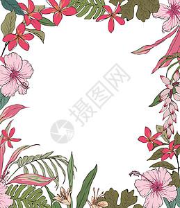 热带花卉边框图片