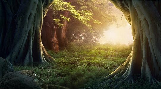 梦幻树木森林图片