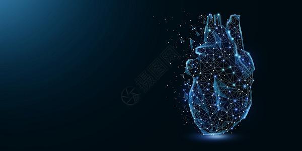 心脏器官图片