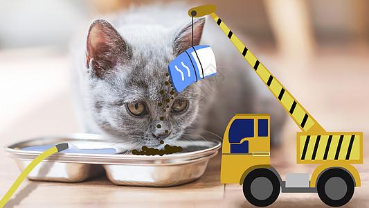 猫咪投食图片