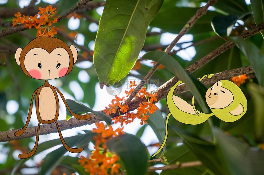 桂花树上的小猴子图片