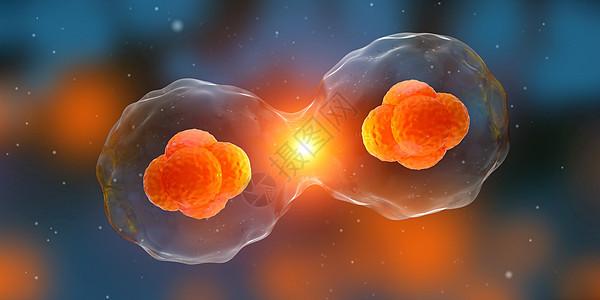 细胞分裂图片