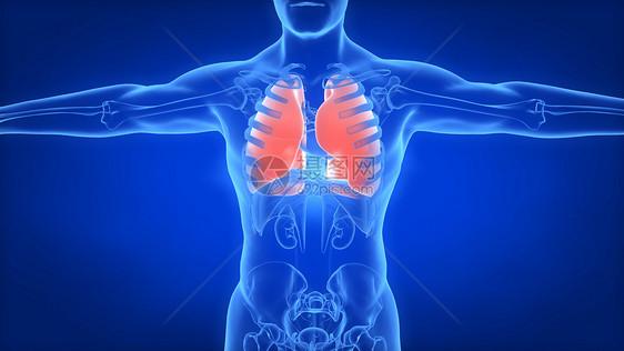 人体肺部场景图片