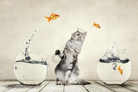 猫调戏鱼图片
